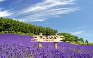 Furano farm Tomita sightseeing tour